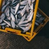 Hunting & Fishing Licenses